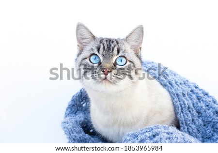 The cat with blue eyes on a white background Foto stock ©