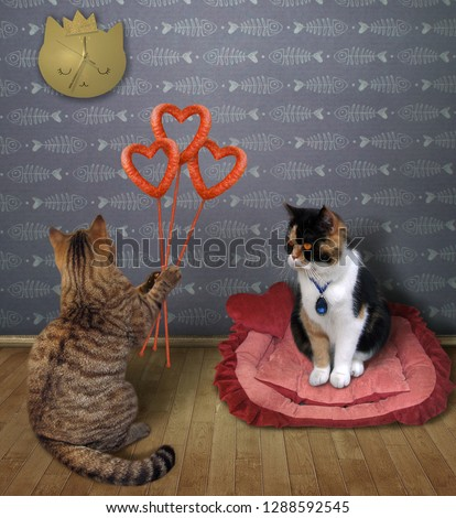 The cat with sausage hearts congratulates his lover on Valentine's Day at home.  #1288592545