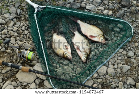 The catch and the fishing gear are on a riverbank on a gray pebble. Three caught fishes are lying in a green landing net next to a black rod is equipped with a reel and a cord of light green color. #1154072467