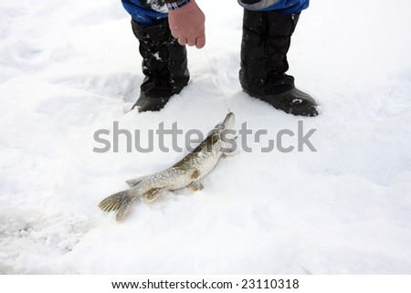 The catch. Pike caught fishing for the winter.