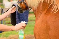 The Caucasian woman is holding the anti-insect repellent for pet in her hand and applying its to the horse coat.