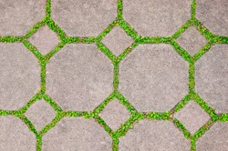 The Cement brick between green grass background