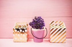 The ceramic pot with small plant put at the middle of small gift box,on pink wooden timber board,blurry light around.