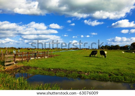 The channel and cows in museum village in Holland. Good autumn day