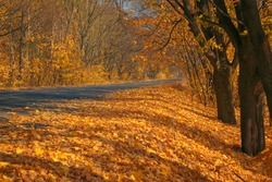 The charm of autumn. Asphalt road in the autumn alley. Golden autumn maple leaves covering the roadsides.