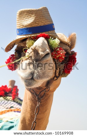 The Cheerful camel on the dark blue sky
