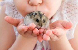 The child holds a hamster in his hands. Hands of a child with a hamster.