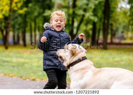 the child is afraid of the dog. Big dog scares a child in the park Foto d'archivio ©