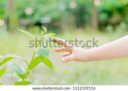 The child's hand reaches out to the plant. #1112109116