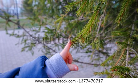 the child touches the needle of the tree with his finger #1377470717