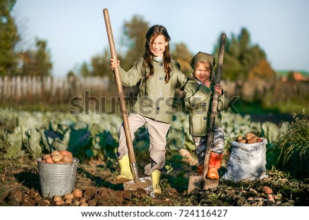 The Children on the harvest of potatoes.