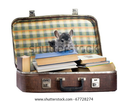 The chinchilla sits in a suitcase with old books
