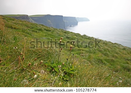 The Cliffs of Moher (Ireland) on a day of mist