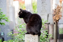 The close up image of black cat sitting on the shaved stone in buddhism graveyard in Aichi, Japan.