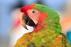 The close up maccaw bird