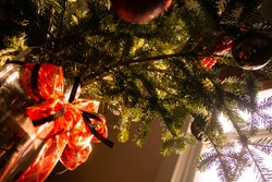 The close-up of decorated for Christmas bouquet of spruce branches or fir or pine tree is in the vase with a big red bow.