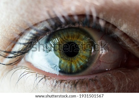 The close up shot of human eye. The human eye is a paired sense organ that reacts to light and allows vision.