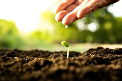 the closeup hand of a man is watering gently on newly planted seedlings in the morning as the sun rises and blur the green, background and bokeh, World tree planting day concept
