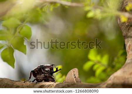 The Closeup Rhinoceros beetle, Rhino beetle, Hercules beetle, Unicorn beetle #1266808090