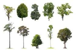 The collection many tree species included on white background.