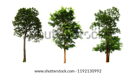 The collection of trees, isolated trees on white background. #1192130992