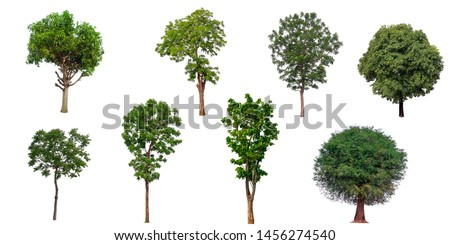 The collection set of trees Isolated on a white background, large images are suitable for all types of art work and print. #1456274540