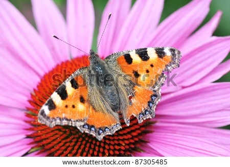 The color butterfly sitting on the flower