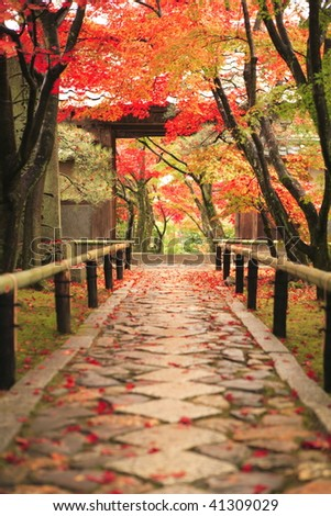 The colored leaves of the Kouetu-temple in Kyoto Japan