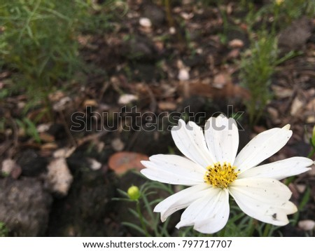 The colorful star blossoms are brightly coloured. #797717707