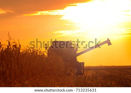 Shutterstock The Combine Operator Getting the Harvest of Corn on the Field of Corn at the Sunset on a Summer Evening