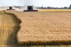 The combine working on the large wheat field
