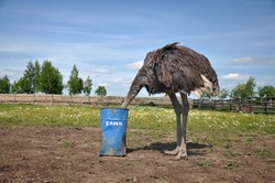 The comic image of the ostrich that hiding its head in a barrel, with the inscription sand. The picture was taken on a bird farm