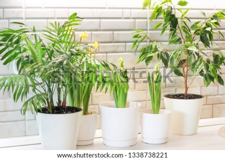 The composition of green domestic plants. Close-up of a plants. Care of home plants. Gardening.  #1338738221