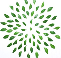 The composition, pattern of green leaves on a white background, top view, flat