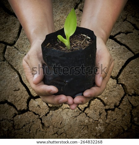 The concept helps conserve energy in global warming. By promoting awareness of growing trees, seedlings with extended features, Light shining from the sun