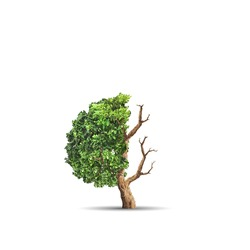 The concept image of ecology. Half alive and half dead tree. Environment concept