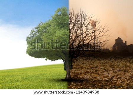 The concept of climate has changed. Half alive and half dead tree standing at the crossroads. The concept of world love and clean energy #1140984938