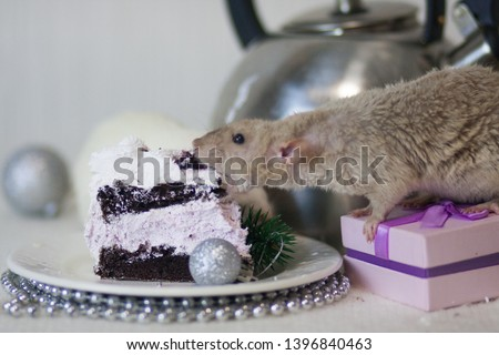 The concept of decoration for the kitchen table. New Year's table. White rat eating cake. White mouse on the holiday table. New Year's rat.