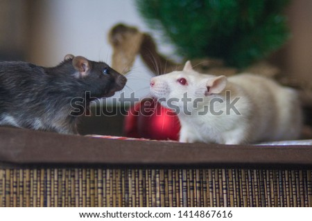 The concept of dialogue mice. Communication rats. White mouse. Gray mouse. White mouse. White rat. #1414867616