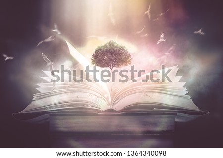 The concept of education by planting a tree of knowledge And birds that fly into the future In the opening of the old book in the library that contains the stack of textbooks that store the text and s #1364340098