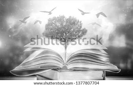 The concept of education by planting a tree of knowledge And birds that fly into the future In the opening of the old book in the library that contains the stack of textbooks that store the text and s #1377807704