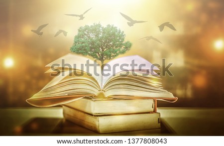 The concept of education by planting a tree of knowledge And birds that fly into the future In the opening of the old book in the library that contains the stack of textbooks that store the text and s #1377808043