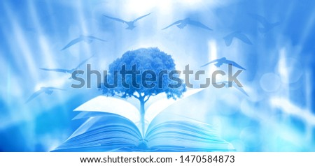 The concept of education by planting a tree of knowledge in the opening of an old book in the library and the magical magic of light that flies to the destination of success. Beautiful background #1470584873