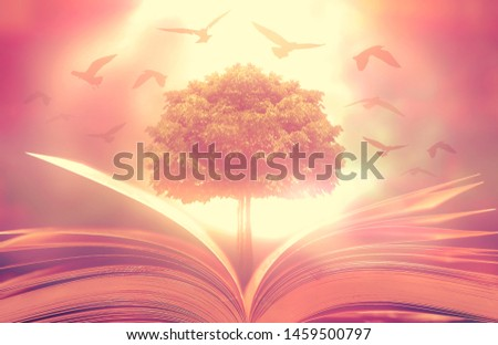 The concept of education by planting trees of knowledge and birds that fly into the future in opening old books in libraries with stacks of textbooks that store messages.