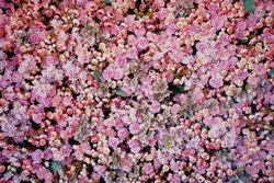 The concept of flowering in spring. A sea of flowers, roses, peonies, carnations. A large bouquet of different plant petals.