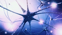 the concept of nerve cells and nerve endings in the brain