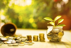 The concept of saving money for the future and building financial stability and sustainable living and hand putting money coin and tree growing in jar.