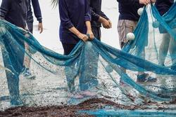 The concept of unity of fishermen, fishing, trawlers, nets, beach  ,  Shallow water fishing.