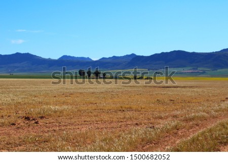 The contrasting colors of a dry farm field and a canola field with farm houses in the middle of the picture. Western Cape, South Africa.