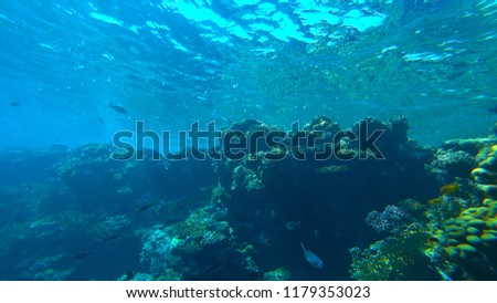 the coral reef #1179353023